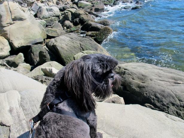 dog enjoying view
