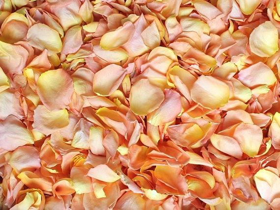 peach rose petals