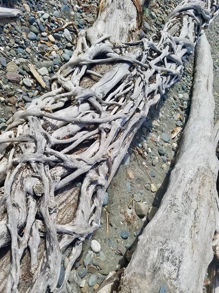 Driftwood on Richmond Beach